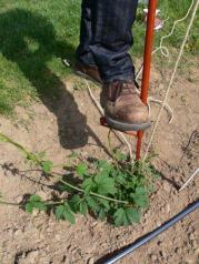 W clip tool soil