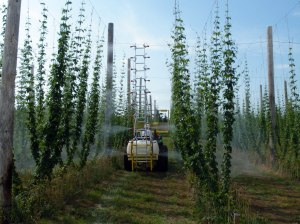 The Hopsprayer being tested in a hops yard.