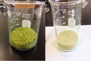 Figure 2: Zeus hops pre and post CO2 extraction. Photos courtesy of Loyalist College.