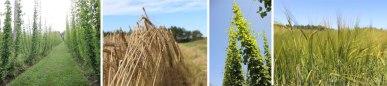 Barley-&-Hops-Header