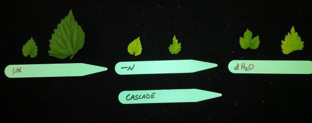 -N leaves