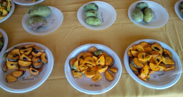 Pawpaw variety taste testing 2